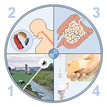 Признаки кишечной инфекции в детском возрасте