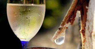 как выглядит сок березы